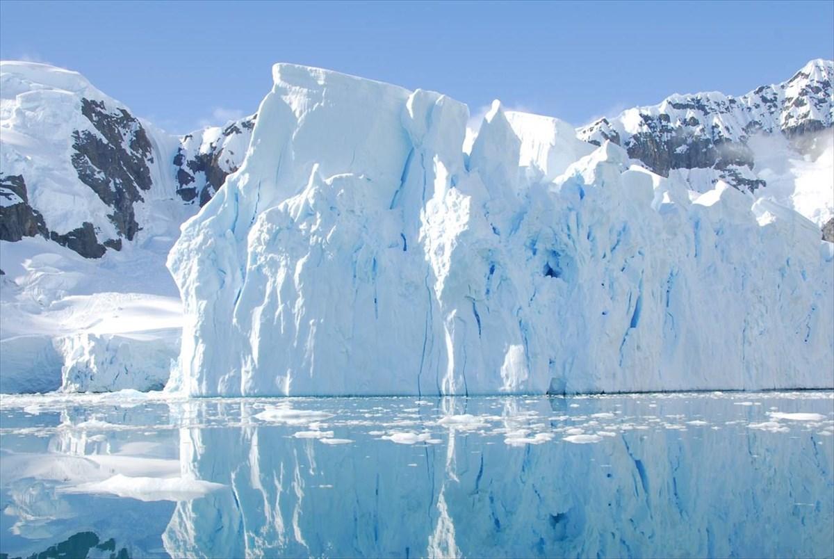 pagetonas antarktiki